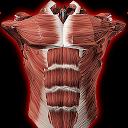 سیستم عضلانی سه بعدی
