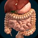 ارگان های سه بعدی بدن