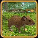 زندگی موش
