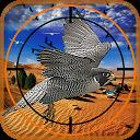 شکار پرنده در بیابان