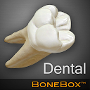 جعبه استخوان - دندان