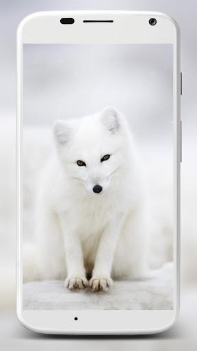 نرم افزار اندروید پس زمینه روباه - Fox Wallpaper HD