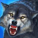 تکامل گرگ