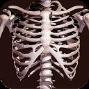 آناتومی استخوان انسان