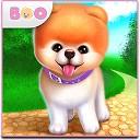 بو - نازترین سگ دنیا