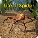 زندگی عنکبوتی