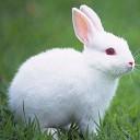 صحبت کردن خرگوش
