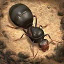 مورچه ها - پادشاهی زیرزمینی