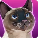 هتل گربه - نگهداری گربه