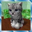 بچه گربه ناز