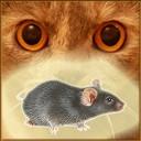 موش روی صفحه نمایش برای گربه